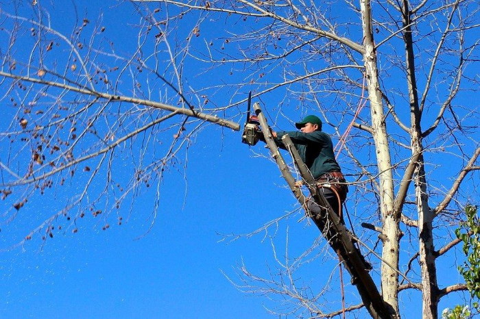 Check the Following Things in Your Tree Service